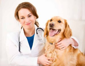 how to become veterinary doctor in India